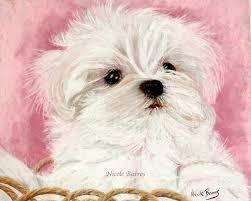 maltese dog maltese puppy maltese painting print animal