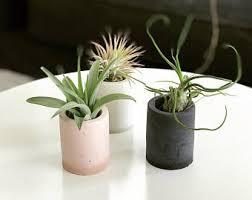 best plant for desk desk plant etsy