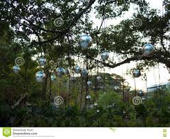 large silver balls hanging from the branches stock photo image