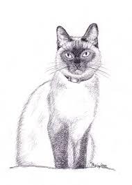 file siamese cat pencil drawing jpg wikimedia commons