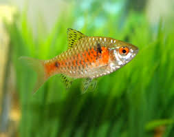 how to test for disease in your freshwater fish petcha