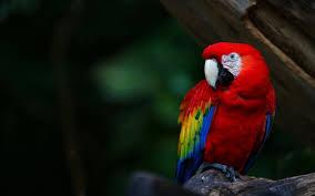 bird wallpaper parrot bird wallpaper parrots pinterest parrot bird creature