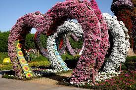 dubai miracle garden photos petra on the way