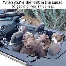 Dog In Car Meme - 20 funny memes of cats dogs and moving vehicles i can has