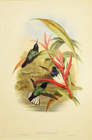 how to write an art history paper this animal art museum is like an art history zoo creators hand colored lithograph on paper 22 x 30 in gift of john r moore national museum of wildlife art