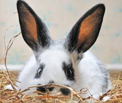 help my rabbit is sick and i can u0027t reach my vet petfinder