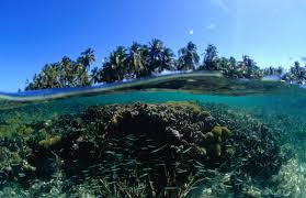 bird island belize rental belize u0027s reef saved by researchers who stumble on solution