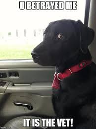 Dog At Vet Meme - betrayed dog memes imgflip
