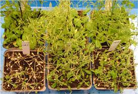 Heat Resistant Plants Scientists Discover A Drought Tolerance Gene That May Help Plants