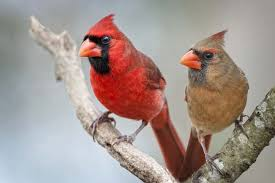 Birds In Your Backyard What Varities Of Birds Are Visiting Your Backyard Pretty Acres