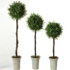 topiary trees artificial topiary trees for rent lease