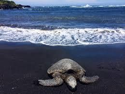 black sand beach hawaii big island babymoon black sand volcanoes waterfalls so much