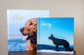 dog photo albums pricing pet photography in portland oregon sit stay pet