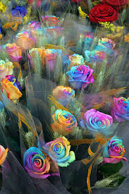 multicolored roses rainbow
