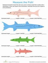 measure a fish centimeters u0026 inches worksheet education com