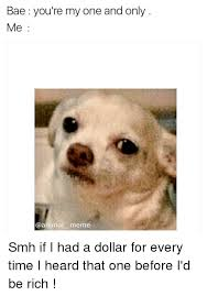 Smh Meme - bae you re my one and only me animal meme smh if i had a dollar for