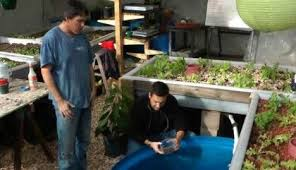 serious aquaponics in colorado trout tilapia tomatoes and more