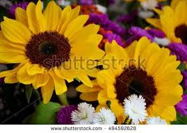 bouquet of sunflowers bouquet sunflowers stock photo 494592628