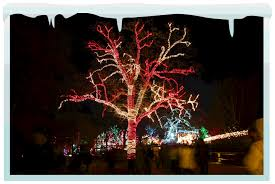 accessories clear tree lights lighting installation