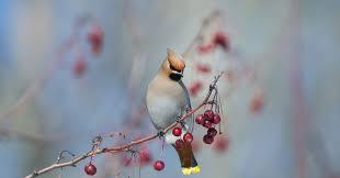 birds on branches photo contest viewbug com