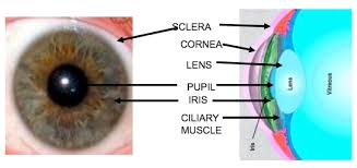 Pathway Of Light Through The Eye Common Causes Of Visual Loss In Children