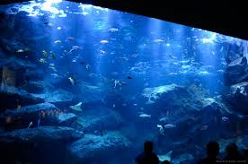 jpvisitor com 10 must go japanese zoos and aquariums in tokyo