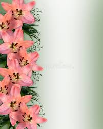 Asian Lilies Pink Asian Lilies Floral Border Stock Photo Image 8789260