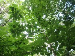 wisconsin native plants i u003emike heim u0027s tertiary rewilding in northern wisconsin pt 2
