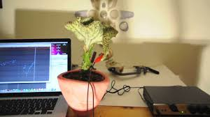 desk cactus experiment with u1 device and cactus youtube
