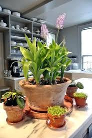 live indoor plants inspiring live house plants 1 live indoor plants for sale finmarket me
