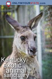 Kentucky wildlife tours images 458 best kentucky images day trips weekend trips jpg