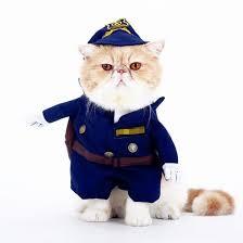 cat costume cat costume amazinglycat