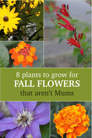 plants native to louisiana 49 best native plants images on pinterest native plants