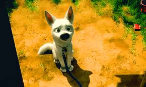 dog cute disney puppy stuff bolt disney bolt dog face