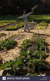 Rock Vegetable Garden Vegetable Garden With Scarecrow At The Farm And Home Of Author And