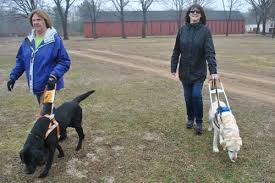 How Does A Guide Dog Help A Blind Person National Association Of Guide Dog Users