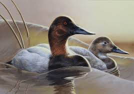 Entry1 by Shalese Sands Canvasbacks