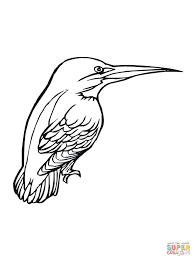 kingfisher bird download coloring page animal drawings of