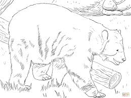 andean bear coloring page free printable coloring pages