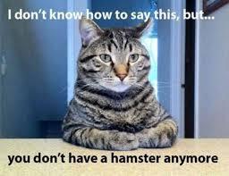 Funny Animal Memes - 19 funny animal memes animal stories