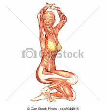 Anatomy Of Women Body Stock Illustration Of Female Body Anatomy Illustration Of The