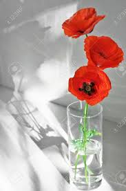 Vase With Red Poppies Three Poppies In Glass Vase With Sunlight And Shadows On Light