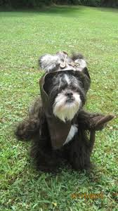 215 best ridiculous dog costumes images on pinterest animals