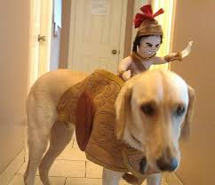 Halloween Costume Ideas For Pets 12 Best Halloween Costumes Ideas For Your Dog Images On Pinterest
