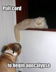 Dog Cat Meme - 25 funny cat memes that will make you lol