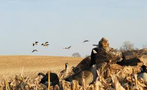 Rogers Goosebuster Blind New Waterfowl Blinds For 2014 Wildfowl