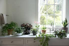 live indoor plants live house plants large canada indoor emsg info