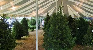 location of christmas trees christmas lights decoration