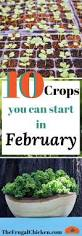 Starting An Organic Vegetable Garden by What Seedlings Can You Start In February Planting Guide Itch