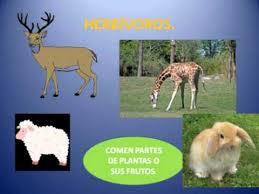 imagenes de animales carnivoros para imprimir animales herbívoros omnívoros y carnívoros youtube